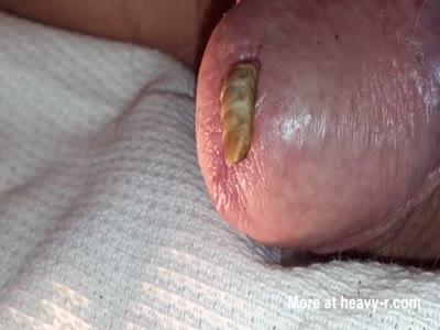 Close up Maggot
