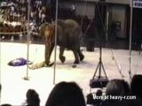 Elephant Killing Spree 1994