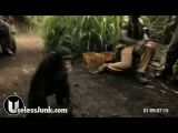 Monkey With AK-47 Shoots Black People