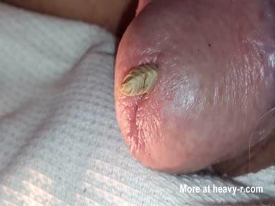Maggot close up range