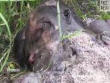 maggots feasting on severed head
