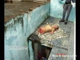 Girl dismembered by Drugs Cartel