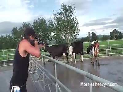 Cow Execution By Gun