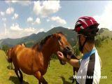 Man stumbles across wild horses