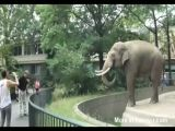 Elephant Throws Poop At Man