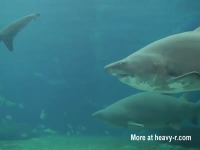 Diver Attacked By Shark