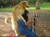 Horny Dog Humps Woman