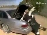 Camel put in trunk