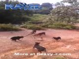 Dogs vs Giant Snake
