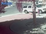 Cat Saves Kid From Dog Attack