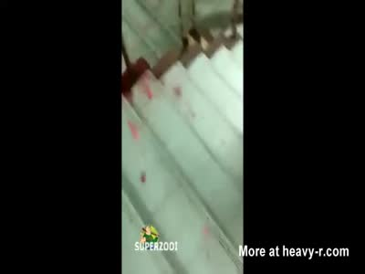 Stairwell Suicide